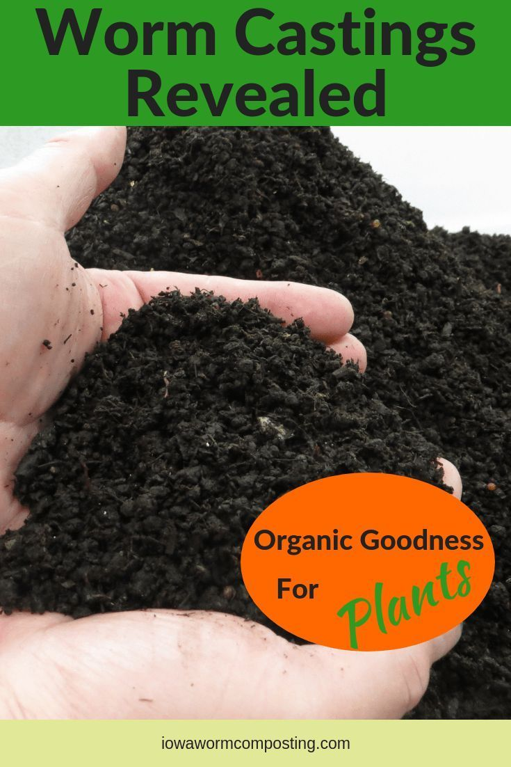 Castings Revealed Have you ever wondered how to grow vegetables without the chemical fertilizers and pesticides? Are you sick and tired of feeding your family those chemical cocktails? Worm castings can be your first step towards an organic garden and healthy fresh-tasting v