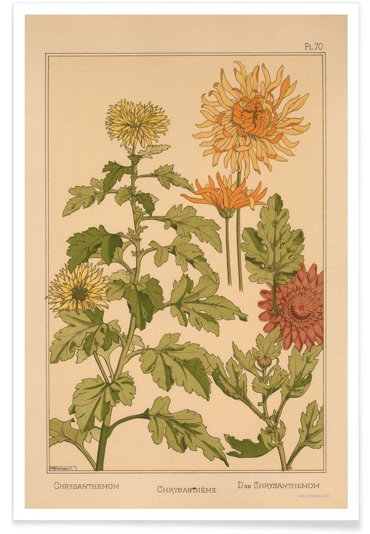 Eugene Grasset - Chrysanthemum 70 VON Vintage Art Archive now on JUNIQE!