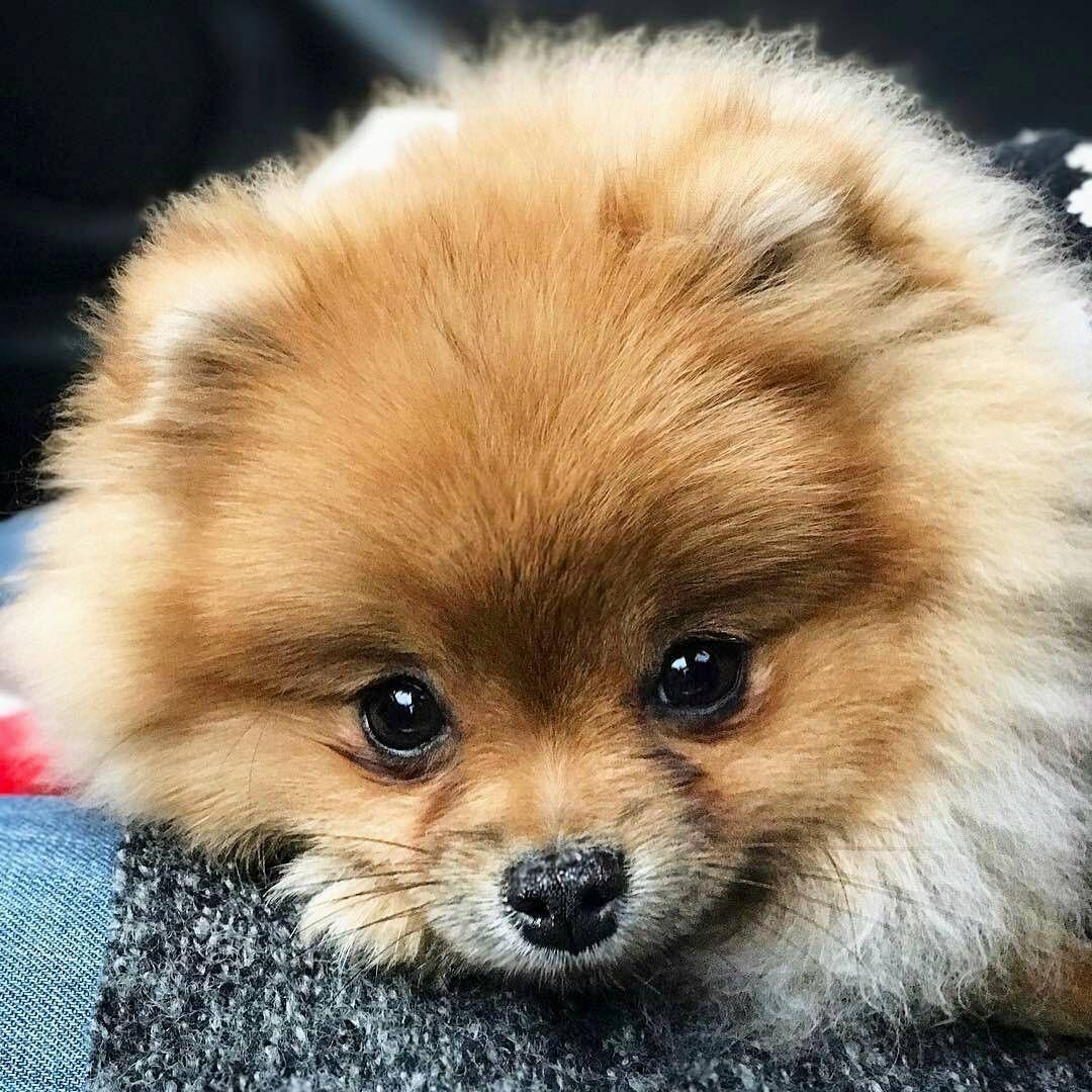 Картинки самых милых пород собак