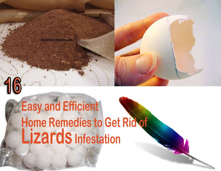 16 easy and efficient home remedies to get rid of lizards