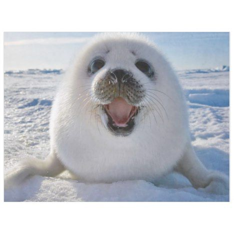 BABY HARP SEAL FLEECE BLANKET | Zazzle.com | Cute animals ...
