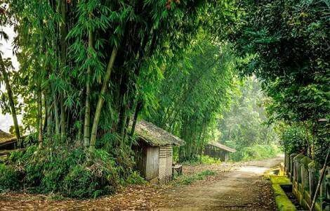 Alam Pedesaan Nan Indah Dg Rimbunya Tumbuhan Suatu Tempat Yg Nyaman Pedesaan Fotografi Tempat
