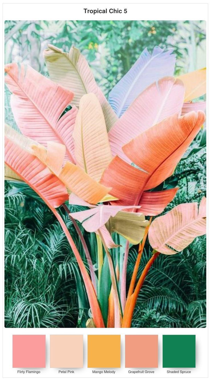 Colour Combinations for the Tropical Chic Bundle #colorpalette #tropical #palette