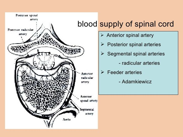 anterior spinal artery syndrome - Google Search | Aa map | Pinterest