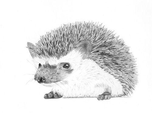 5. februára 2013. ježko. ceruzka