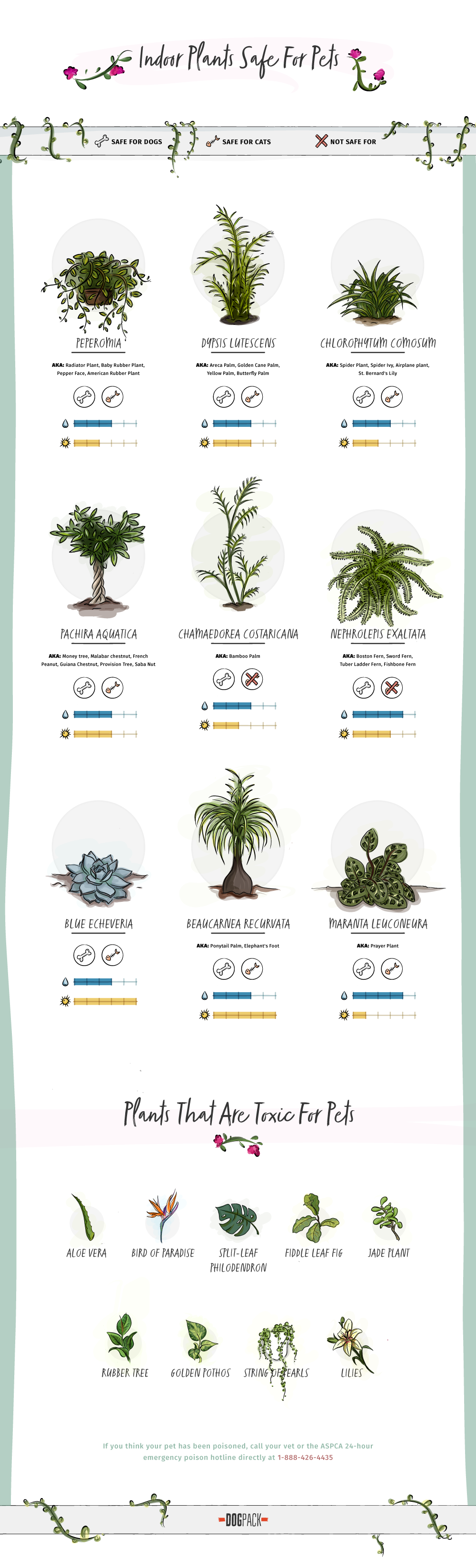 Plants That Are Poisonous For Dogs And Cats Plants Cat Plants Indoor Plants