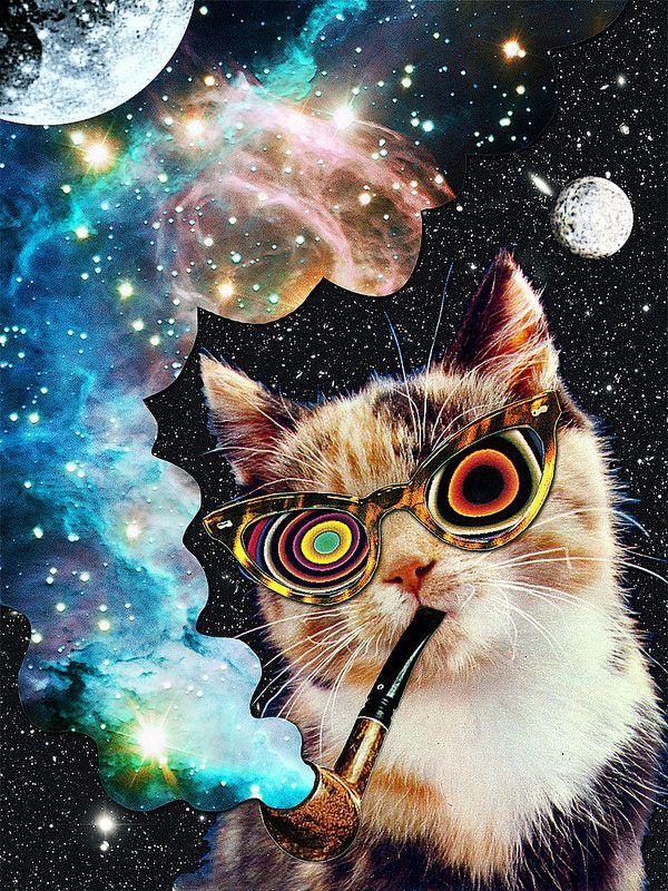 High Cat Cat Art Print Psychedelic Art Cat Art