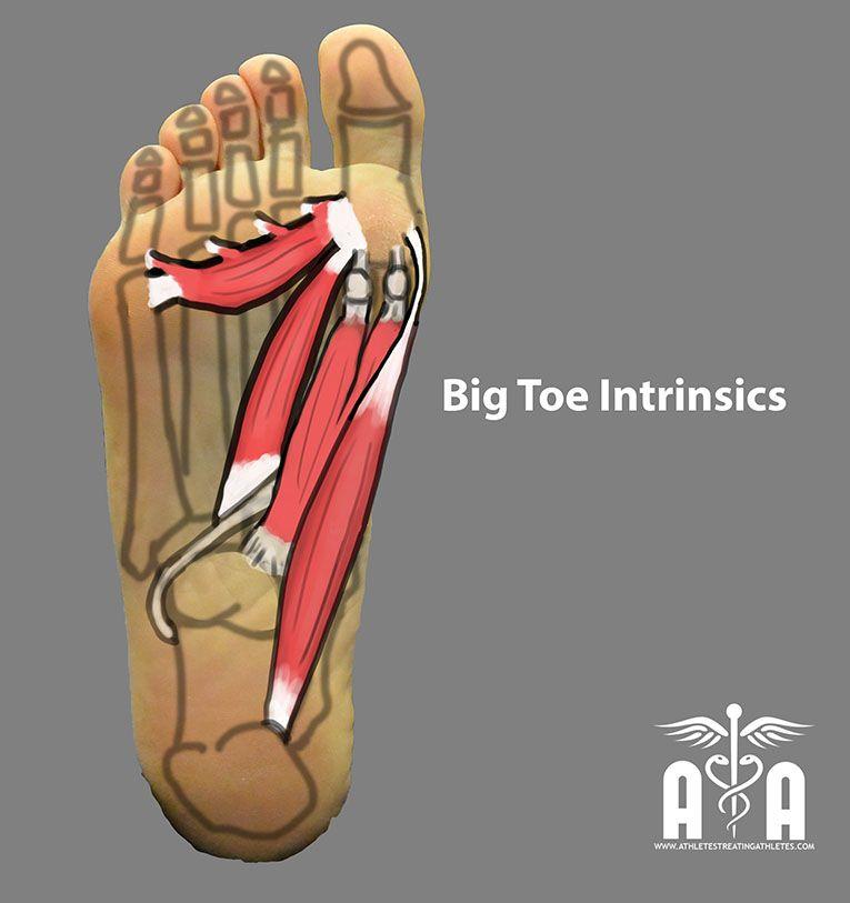 Foot Intrinsics Athletes Treating Athletes Anatomy Pinterest