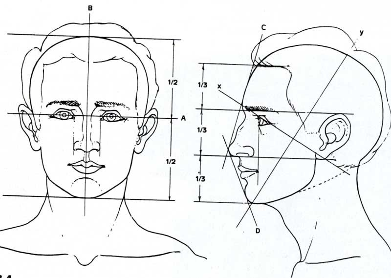 Facial proportions on pinterest face proportions for Size and proportion