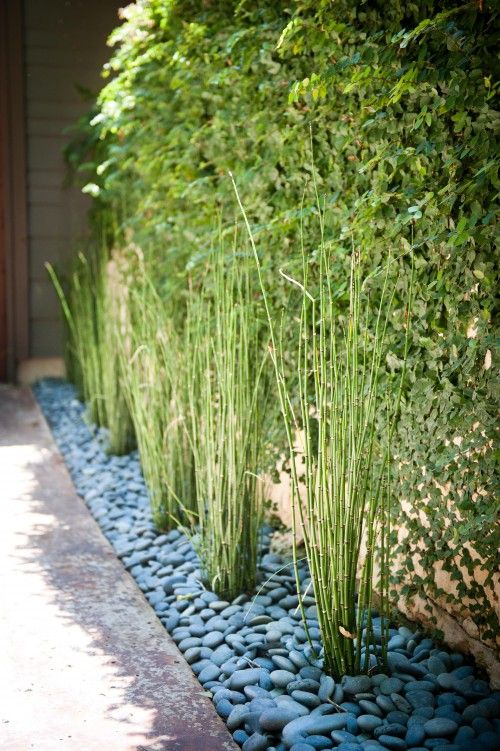 Bamboo In Stone Bedding I M Thinking Using These Rocks In My