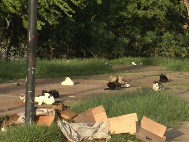 Gatos são encontrados mortos em praça em São Luís, MA - http://anoticiadodia.com/gatos-sao-encontrados-mortos-em-praca-em-sao-luis-ma/