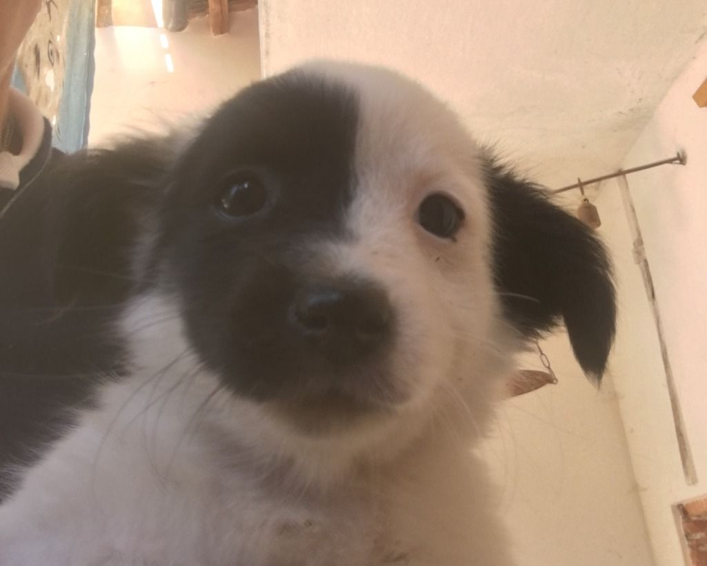 Cuneo REGALO CUCCIOLI DI METICCI PICCOLA TAGLIA regalo cuccioli cani  cuneo Vai all\u0027annuncio