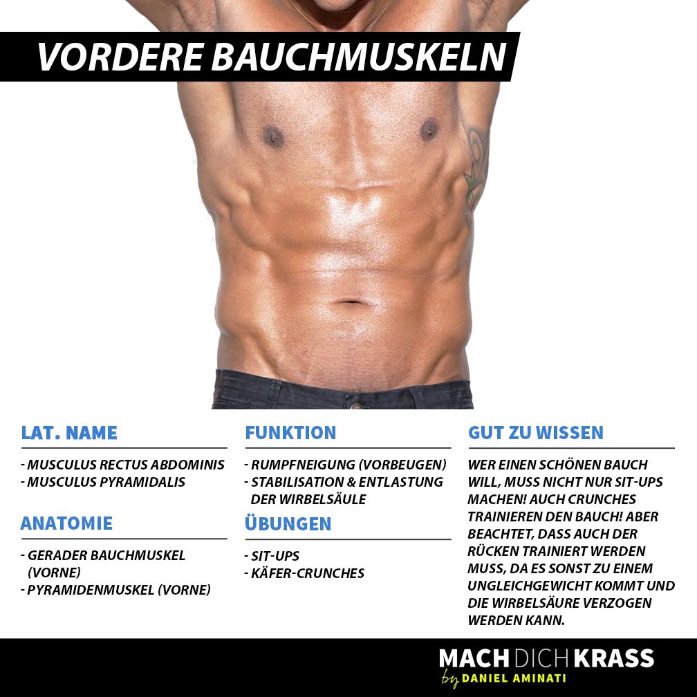 Brustmuskel | Muskelkunde | Pinterest