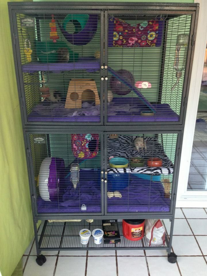rat cage setup from ratgirl44 on youtube rats pinterest rat cage rats and pet rats. Black Bedroom Furniture Sets. Home Design Ideas