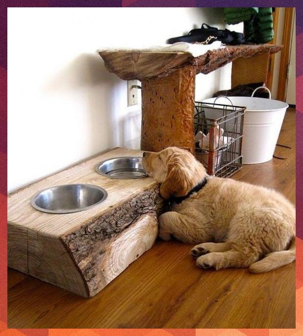 10 kreative DIY Hundenapf Ideen für Ihr Haustier dogs
