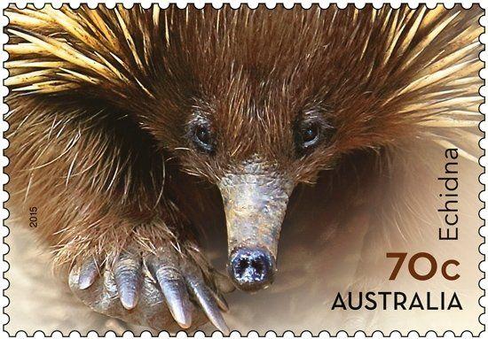 Stamp: Short-beaked Echidna (Tachyglossus aculeatus ...