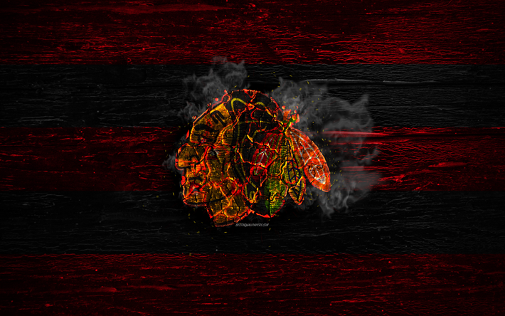 Download Wallpapers Chicago Blackhawks Fire Logo Nhl Red And Black Lines American Hockey Team Grunge Hockey Logo Chicago Blackhawks Wallpaper Western C American Hockey Chicago Blackhawks Wallpaper Chicago Blackhawks