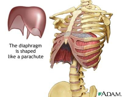 39+ What does a diaphragm look like ideas in 2021