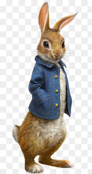Peter Rabbit Png Image Peter Rabbit Movie Sony Pictures 294 556 Png Download Free Transparent Ba Peter Rabbit Pictures Peter Rabbit Movie Rabbit Pictures