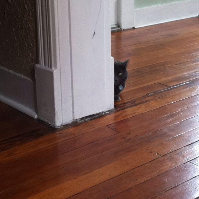 Sneaksy kittinz
