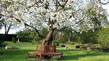 kirschb ume im sommer schneiden garten pinterest kirschbaum garten und baum. Black Bedroom Furniture Sets. Home Design Ideas