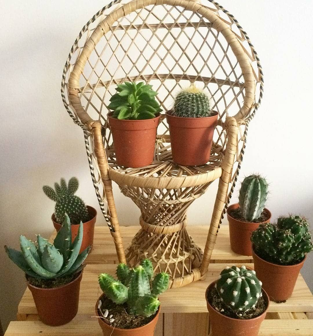 Pin by Trâm on My garden | Pinterest | Cacti and Gardens