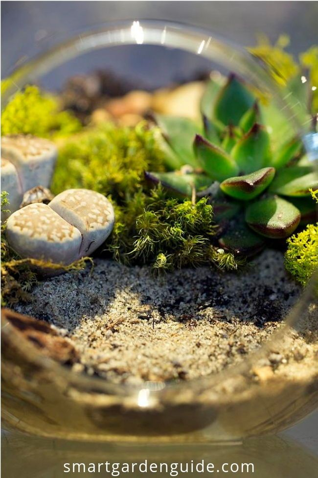 How Does A Terrarium Work Learn More About Terrariums Terrarium