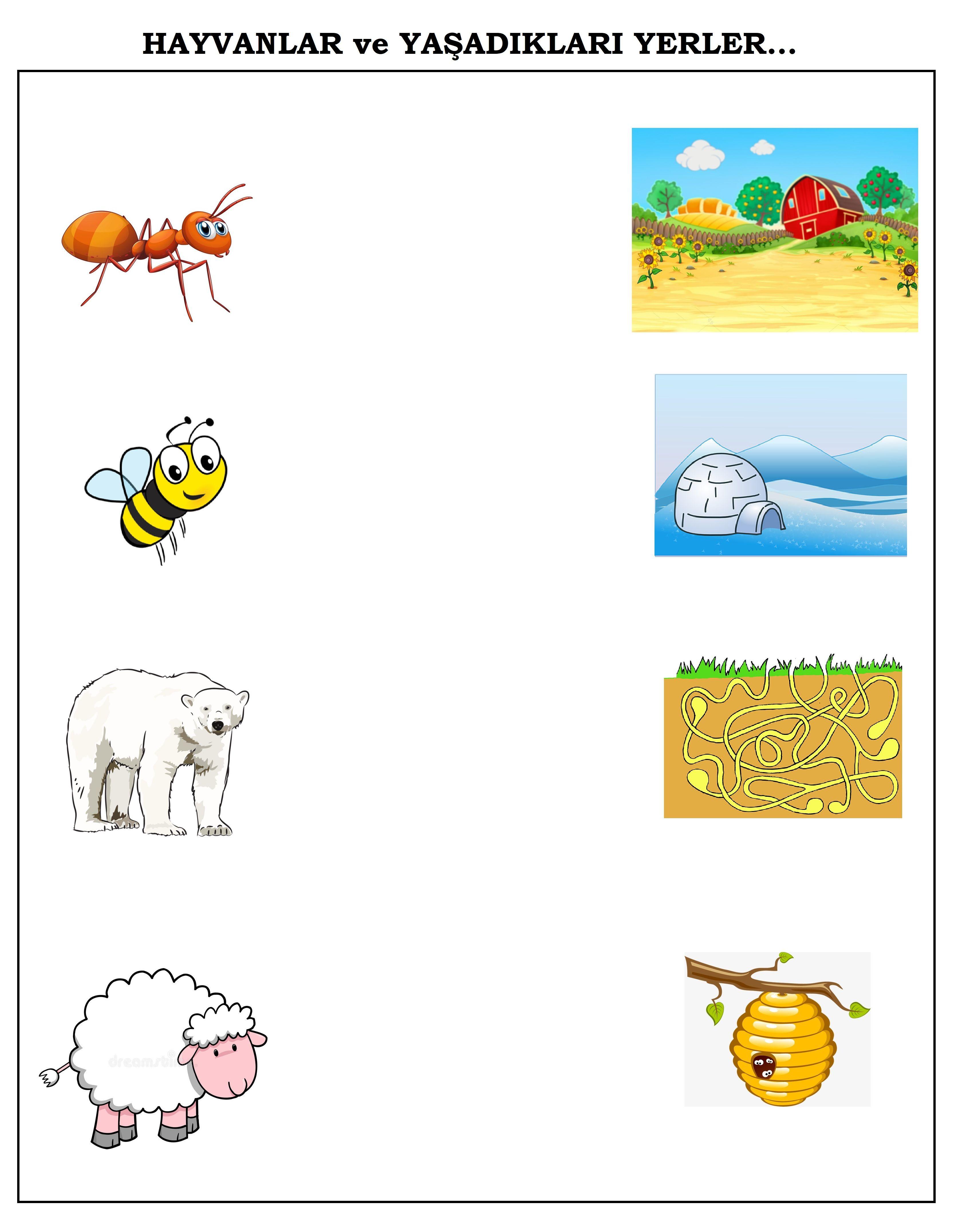 Okul öncesi Hayvanlar Ve Yaşadiklari Yerler Matematik Homework