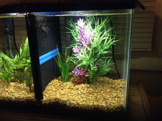 Male betta tanks with dividers google zoeken animals for Fish tank divider 5 gallon