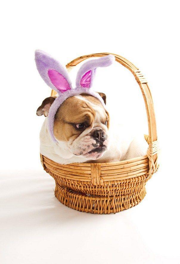 Happy Easter | BaggyBulldogs
