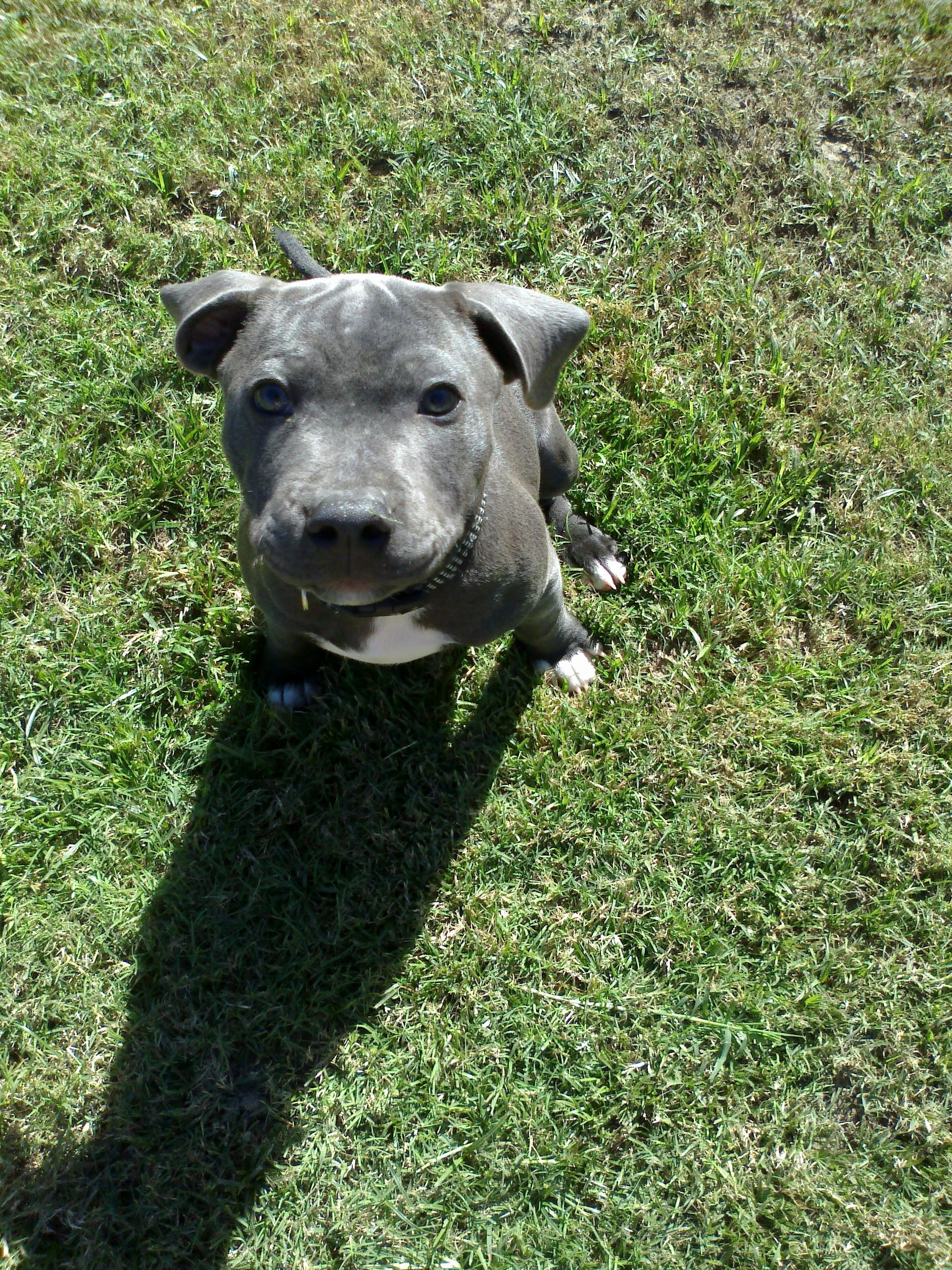 X Dawg Animals, Dogs, Staffies