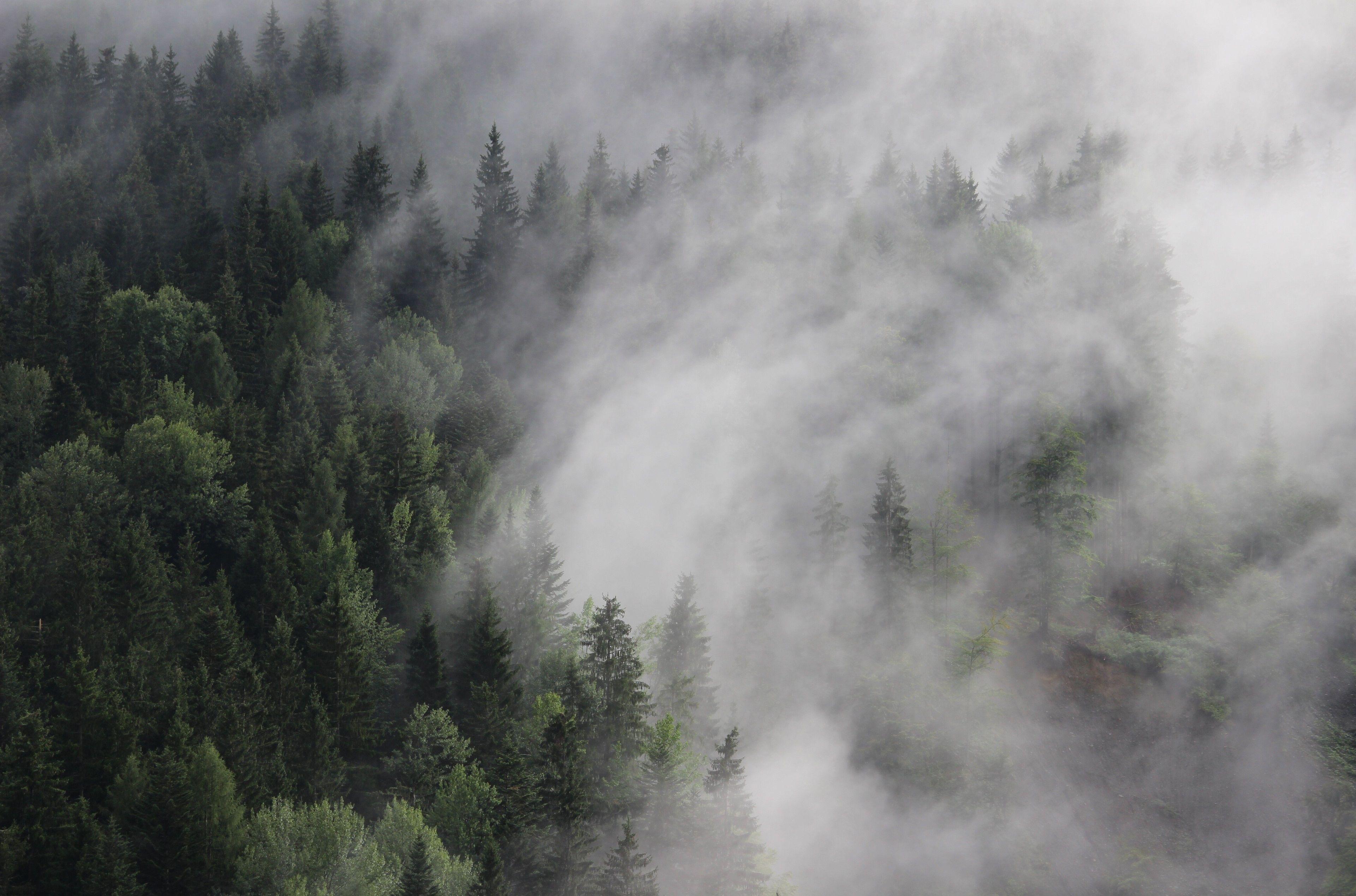3840x2538 Austria 4k New Wallpaper Hd For Desktop Forest Wallpaper Foggy Forest New Wallpaper Hd