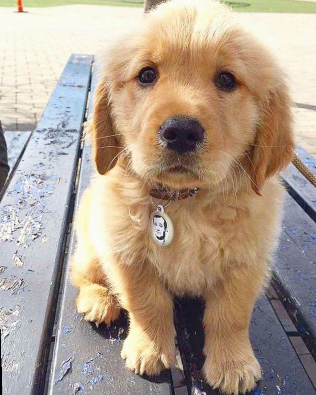 Pin By Olivia Wheeling On Pupperonis In 2020 Puppies Golden Retriever Dogs Golden Retriever