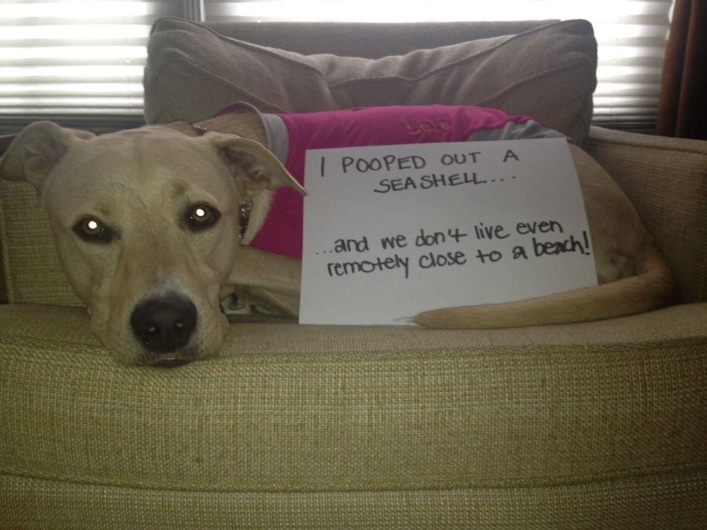 So funny hahaha pinterest funny dog shaming and funny dogs