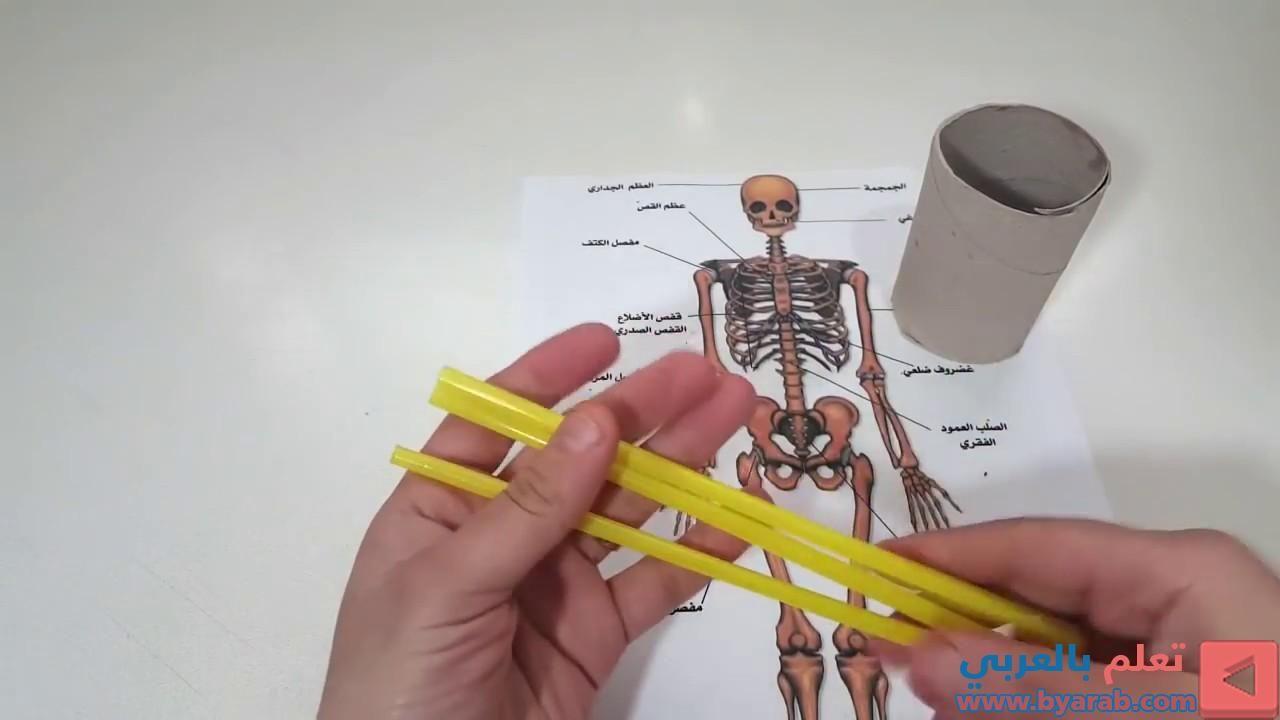 كيفية عمل مجسم الهيكل العظمي Brushing Teeth Holder Toothbrush Holder
