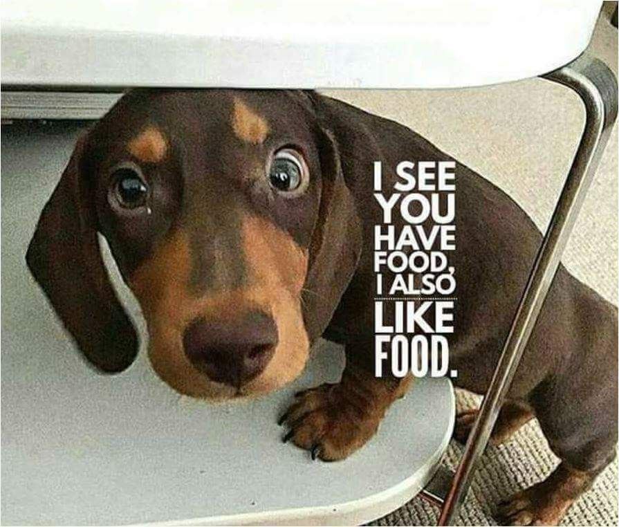 Pin By Debra Hardin On Pip S Dachshund Friends Dachshund Cute