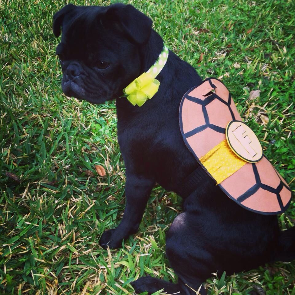 Ninja turtle dog costume DIY