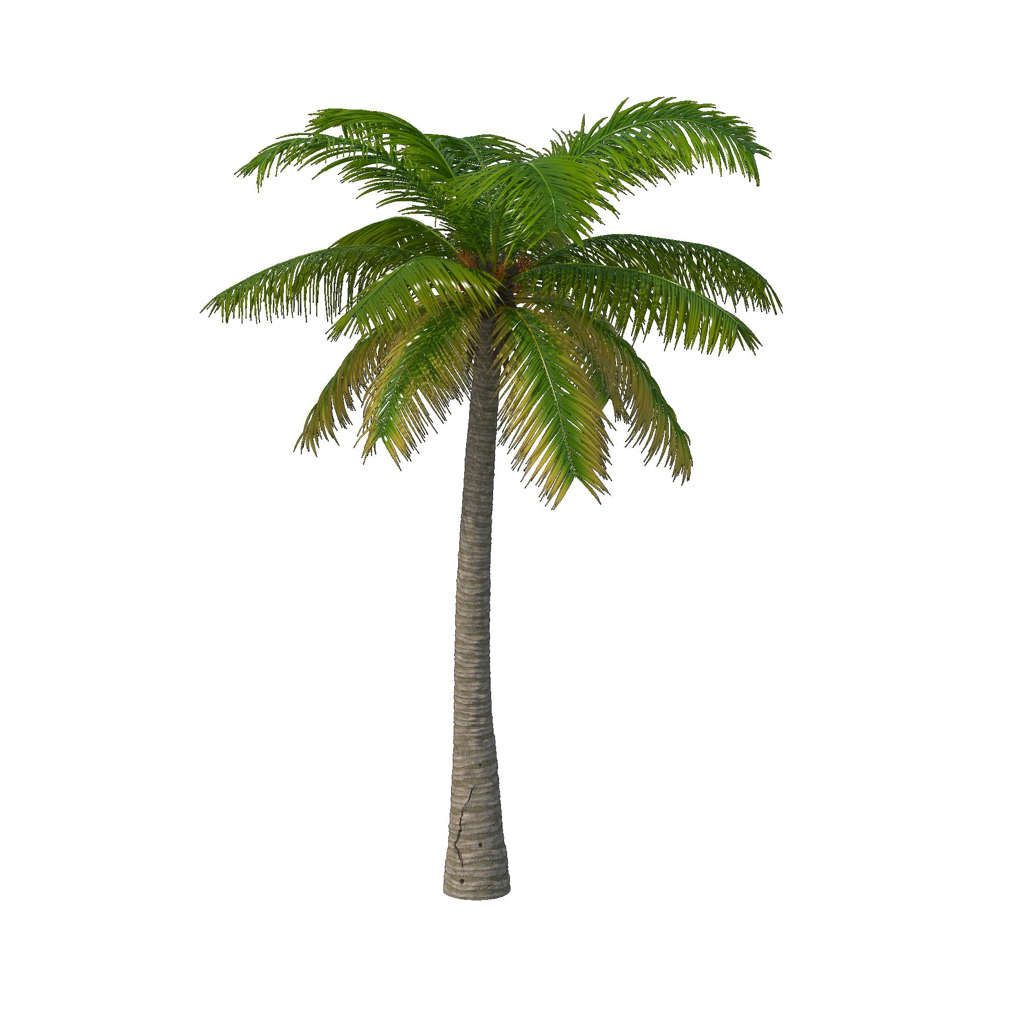 Palm Tree PNG Image | Palm tree png, Palm tree drawing ...