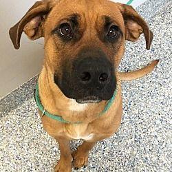 Pet Card Pet Adoption Pets Dogs