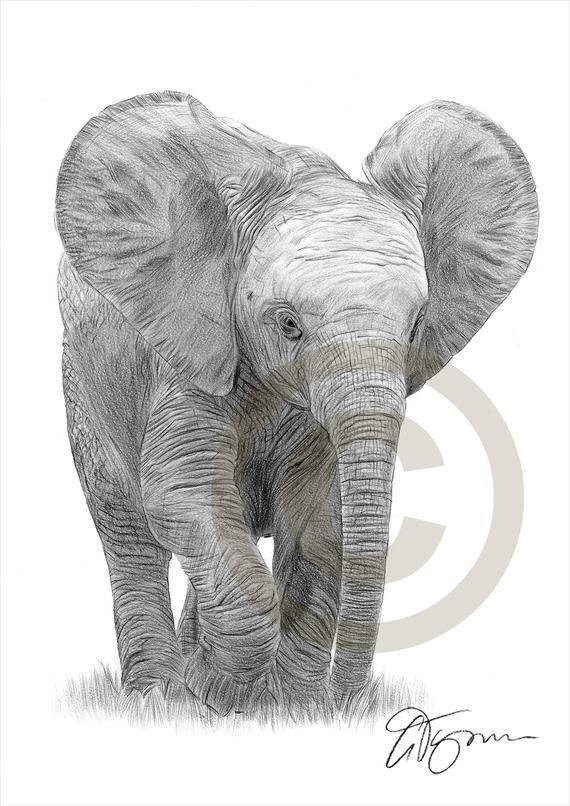 Baby Elephant pencil drawing print elephant art