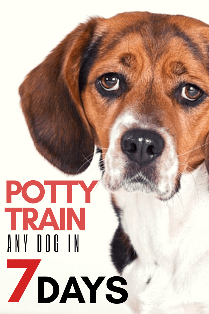 House Training Your Puppy in 7 Days Or Less