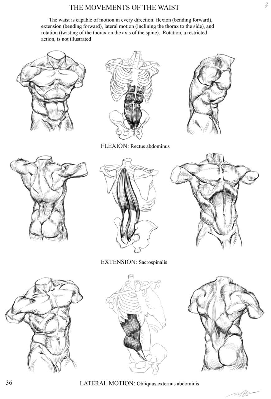 Study of an anatomy page from an unknown book for homework ...