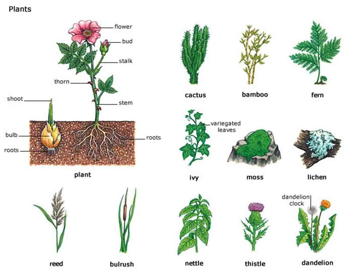 Learn English Vocabulary Through Pictures Flowers And Plants Eslbuzz Learning English Types Of Flowers Plant Classification Different Types Of Flowers
