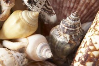 How to Polish Seashells (5 Steps) | eHow