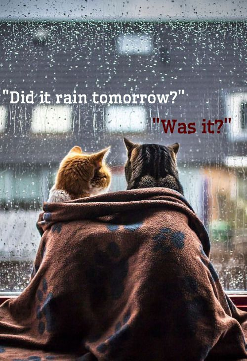 I Miss U So Much Good Night My Love Cats Kittens Cutest Kittens