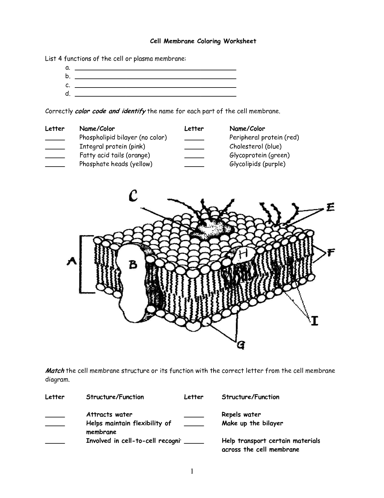 Cell Membrane Worksheet Google Search