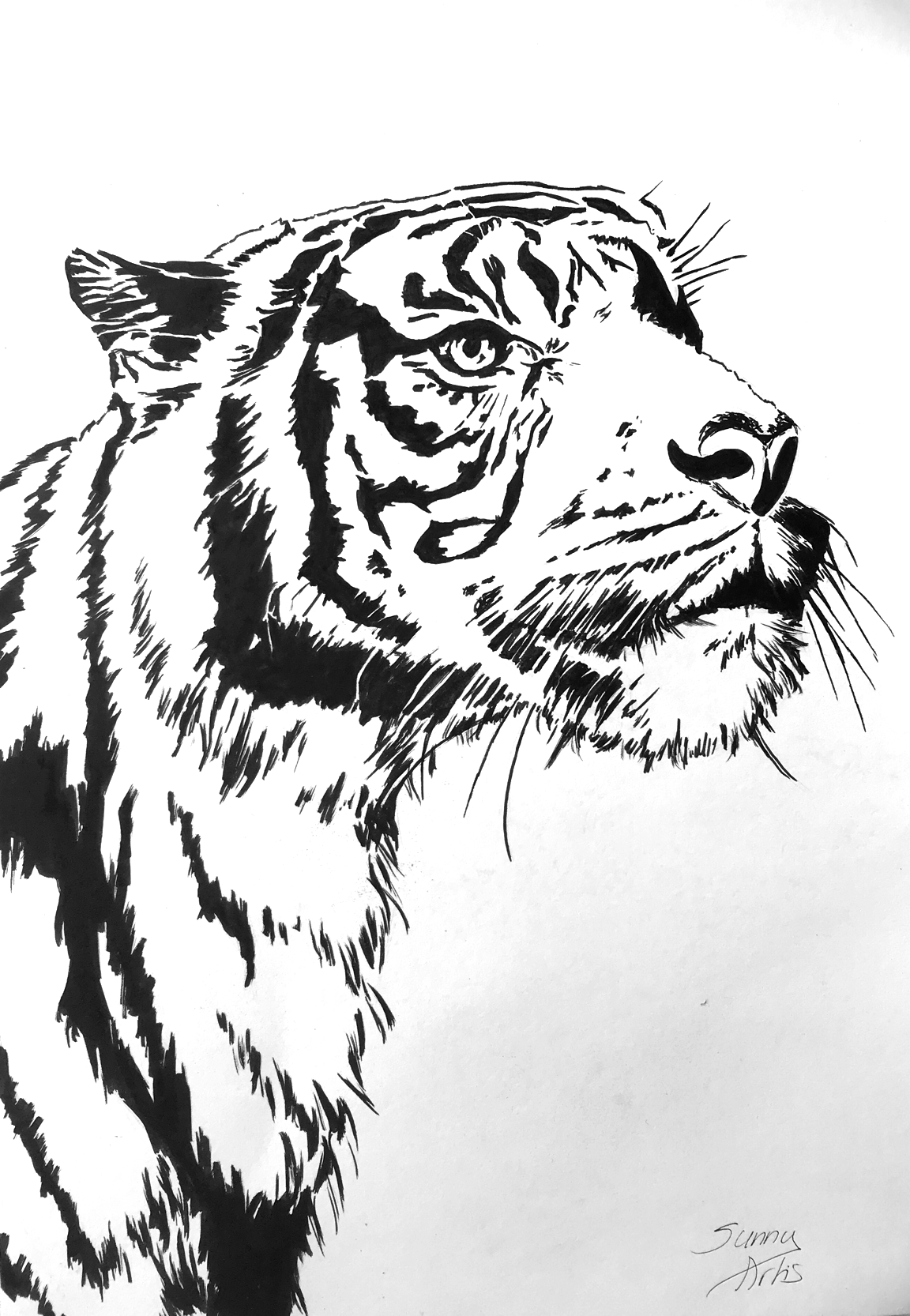 10 Exquisite Learn To Draw Animals Ideas Animal Drawings Drawings Tiger Drawing