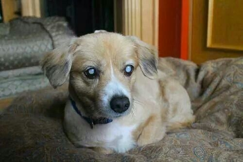 Last Chance Animal Rescue Murphy My Name Is Murphy And I M A Handsome Boy I Am A Very Special Little Man Who Was Saved O Kitten Adoption Pets Dog Adoption
