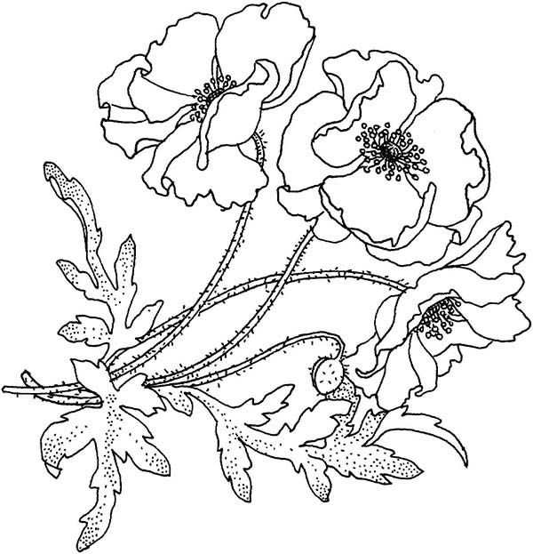 California Poppy California Poppy for the Love One Coloring Page
