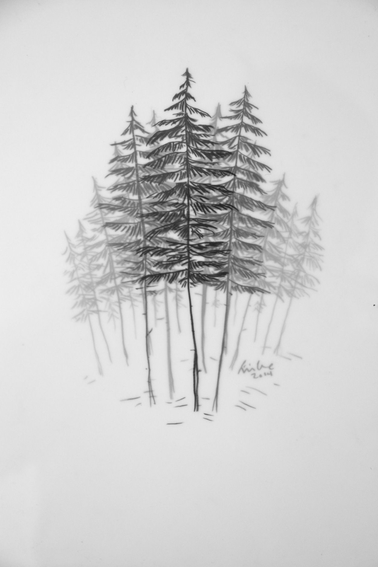 Yellow Cedar Grove by Emilie Crewe 8 x 10 framed Graphite on